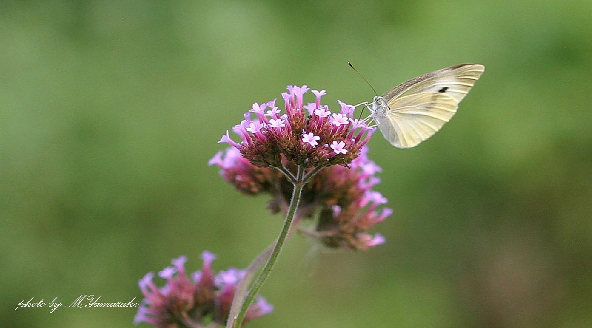花と昆虫の世界 そのⅡ_c0217255_142490.jpg