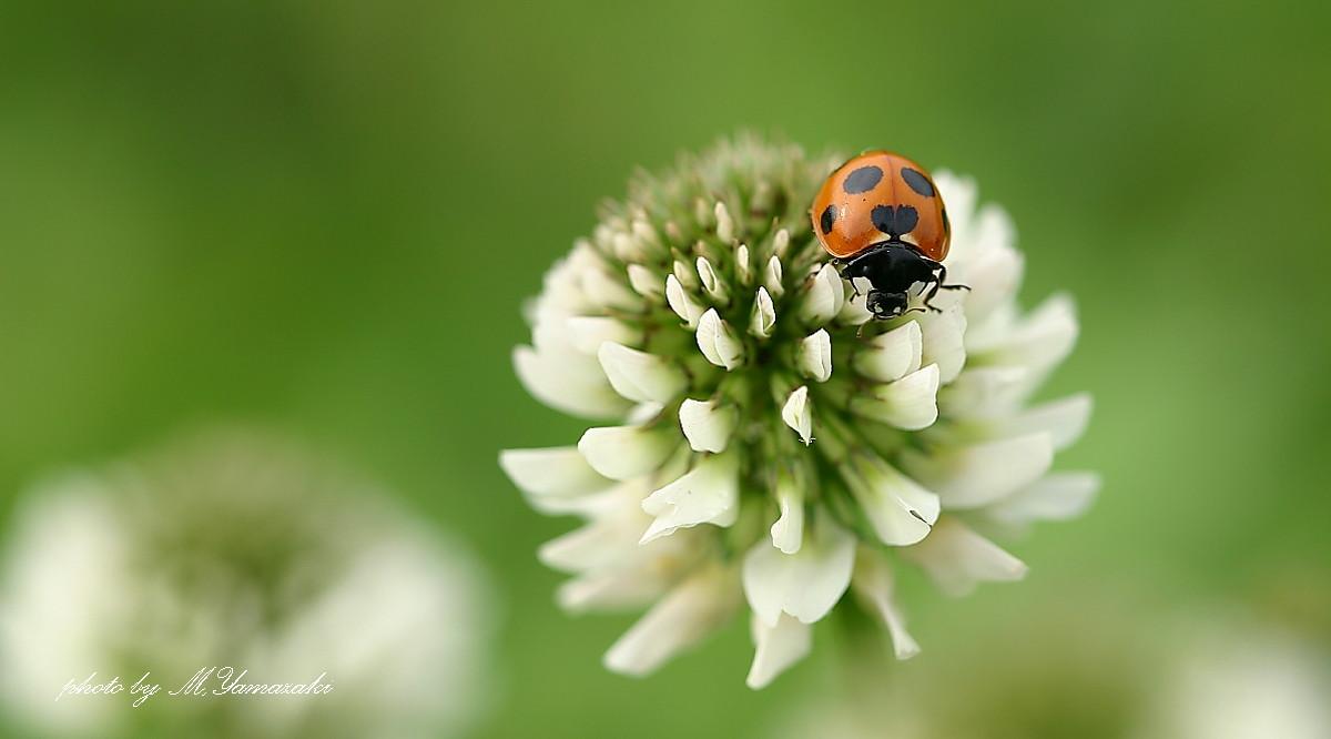 花と昆虫の世界 そのⅡ_c0217255_1434394.jpg