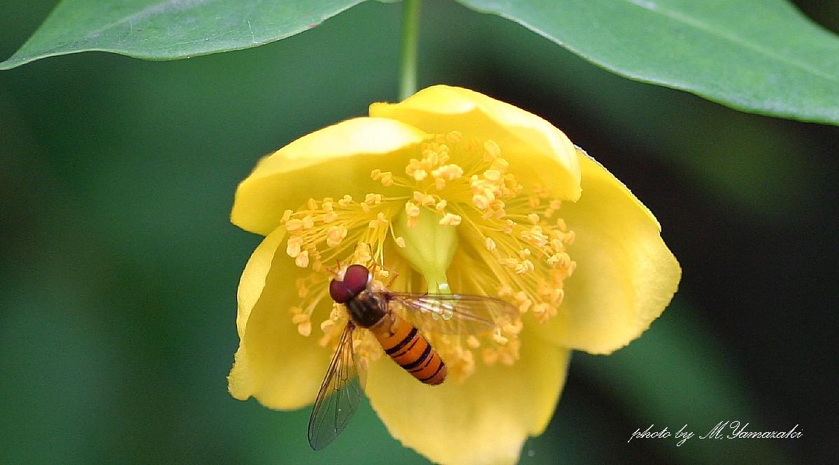 花と昆虫の世界 そのⅡ_c0217255_1453718.jpg