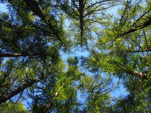 ひさびさに見た青空・・は秋の空、アカゲラさんとエゾリス君も遊ぶ_f0276498_20472571.jpg