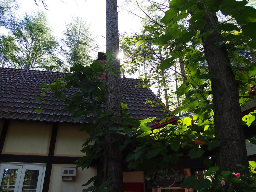 ひさびさに見た青空・・は秋の空、アカゲラさんとエゾリス君も遊ぶ_f0276498_20494760.jpg