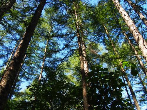 ひさびさに見た青空・・は秋の空、アカゲラさんとエゾリス君も遊ぶ_f0276498_2049542.jpg