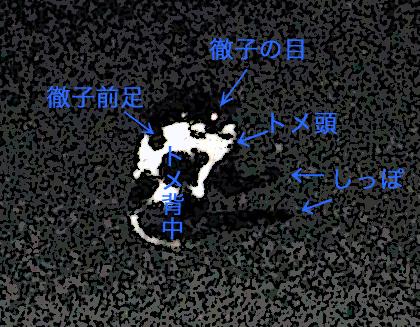 c0211810_1139582.jpg