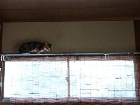 猫のお友だち パピちゃんクロッチちゃん編。_a0143140_2329682.jpg