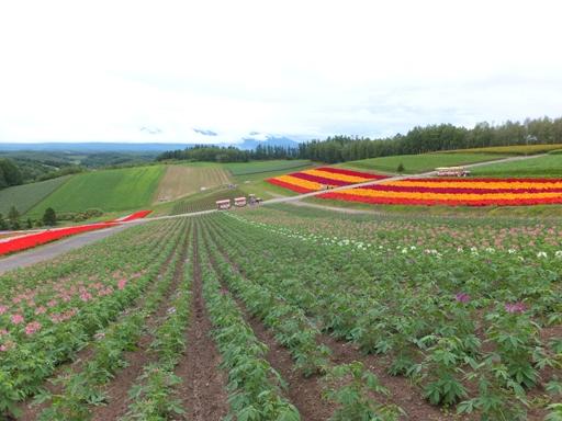 展望花畑 『四季彩の丘』_d0246960_1252811.jpg