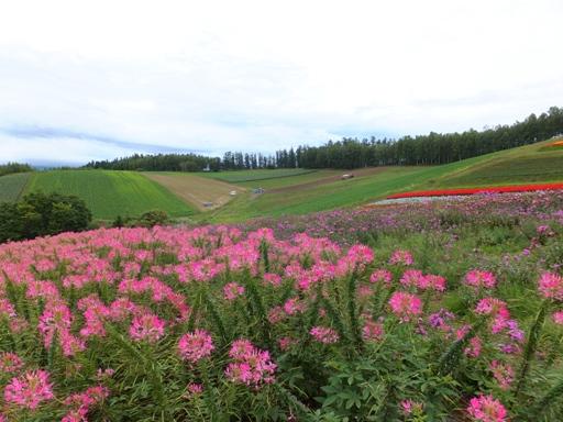 展望花畑 『四季彩の丘』_d0246960_126178.jpg