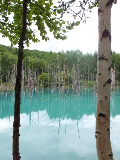青い池_d0246960_23522386.jpg