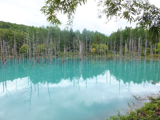 青い池_d0246960_23523213.jpg