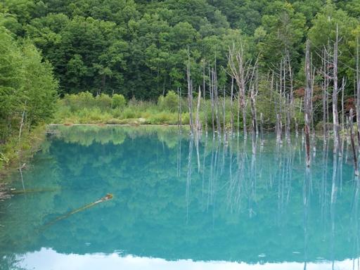 青い池_d0246960_23525641.jpg