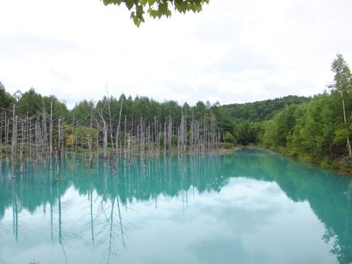 青い池_d0246960_2353581.jpg