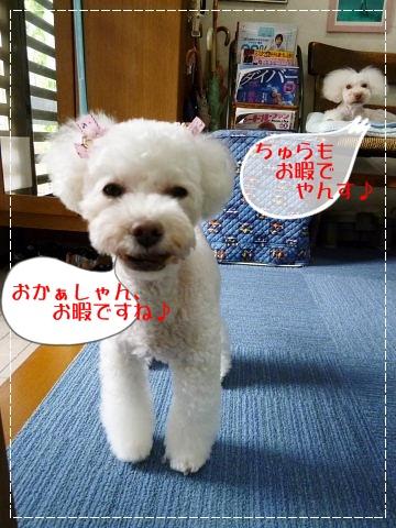 b0104592_1516332.jpg