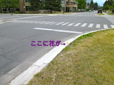 b0051109_8471280.jpg