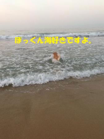 f0176830_1340492.jpg