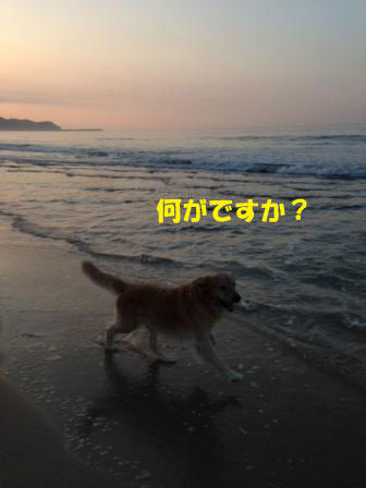 f0176830_19531670.jpg