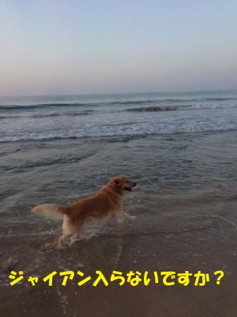 f0176830_19535590.jpg