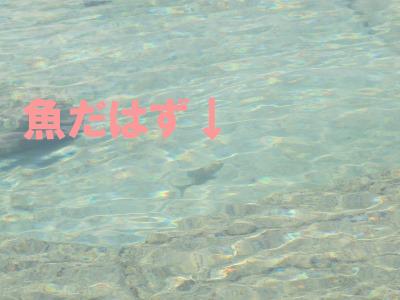 9月 9日 だいたい14:00 ダイビングに行ってしまった後をじっくりとごらんあれ_b0158746_19381013.jpg