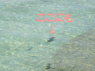 9月 9日 だいたい14:00 ダイビングに行ってしまった後をじっくりとごらんあれ_b0158746_19384551.jpg