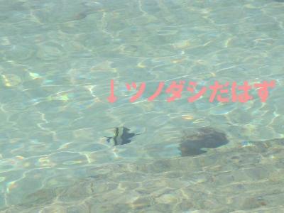 9月 9日 だいたい14:00 ダイビングに行ってしまった後をじっくりとごらんあれ_b0158746_19441867.jpg