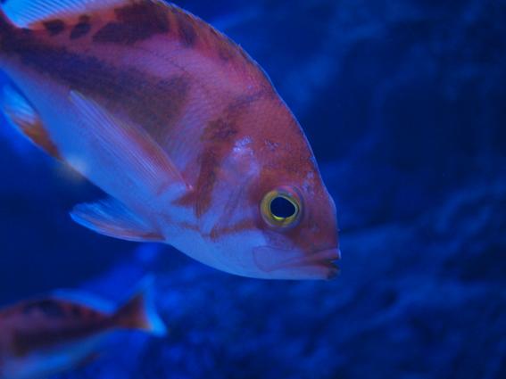 はじめての水族館 あお523日目_d0051613_0412394.jpg