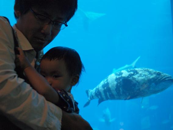 はじめての水族館 あお523日目_d0051613_0412892.jpg