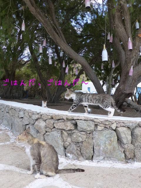 世界の猫 写真館ギリシャ ミコノス島-Super Paradise Beach_e0237625_1644465.jpg