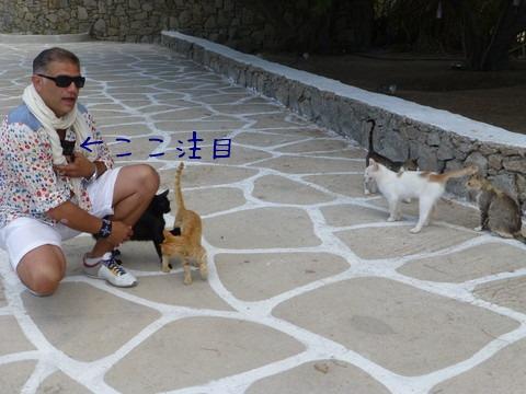 世界の猫 写真館ギリシャ ミコノス島-Super Paradise Beach_e0237625_16482486.jpg