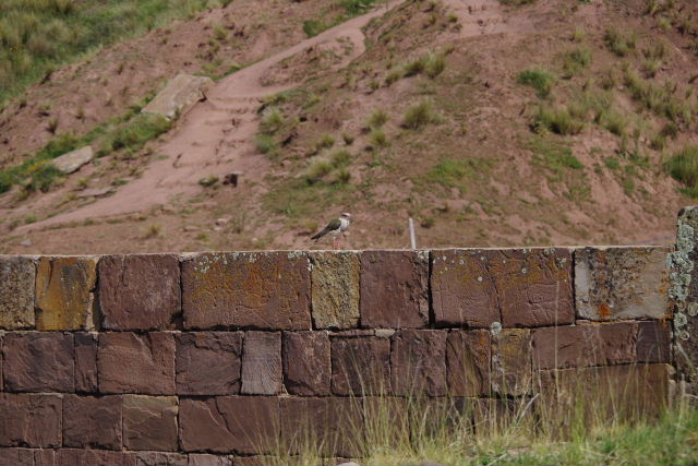 ボリビアの旅(42) 【世界遺産】 ティワナク遺跡 TIWANAKU_c0011649_0241246.jpg