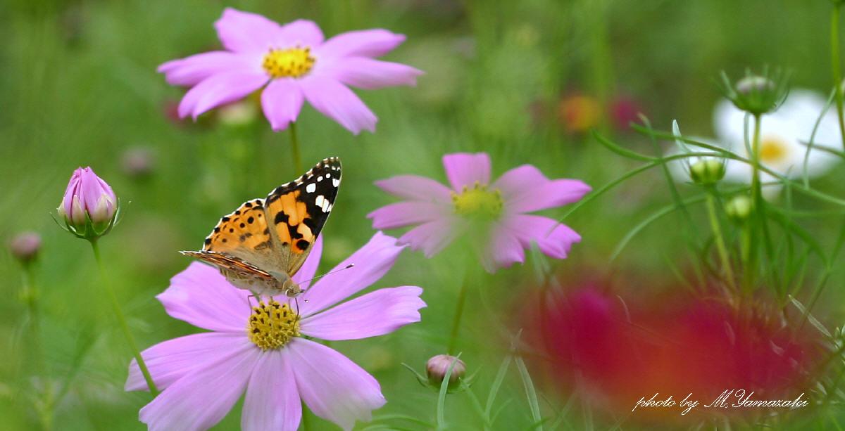 花と昆虫の世界 そのⅢ_c0217255_18475266.jpg
