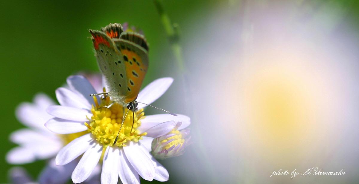 花と昆虫の世界 そのⅢ_c0217255_18484292.jpg