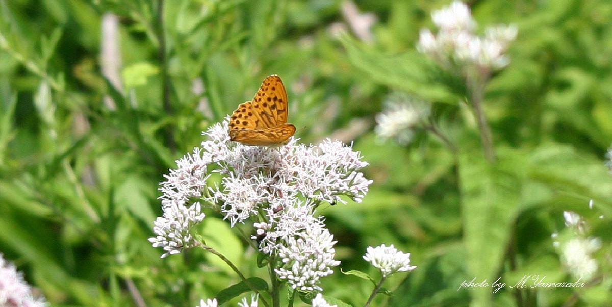 花と昆虫の世界 そのⅢ_c0217255_18513183.jpg
