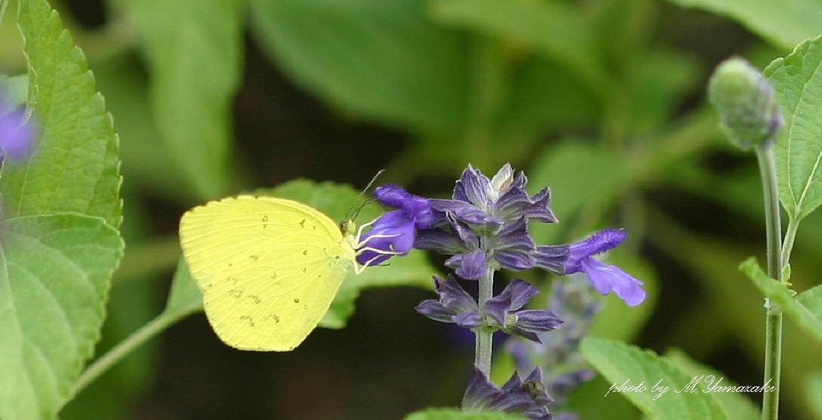 花と昆虫の世界 そのⅢ_c0217255_18521756.jpg