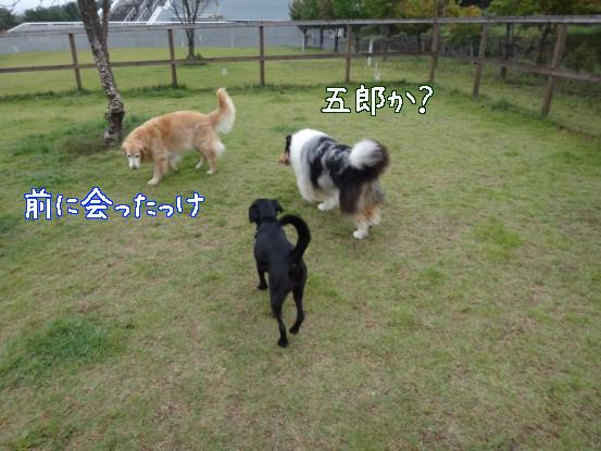 f0064906_20113792.jpg