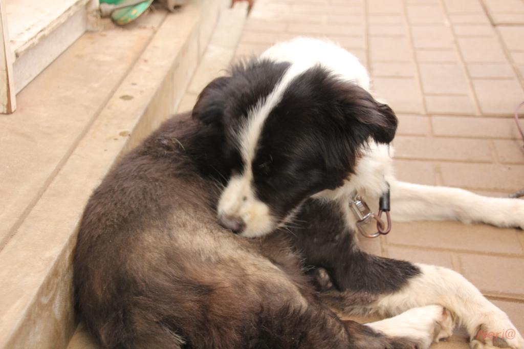 【猫犬】_f0141609_21452787.jpg
