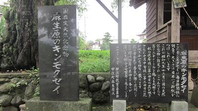 甲佐町の恋愛成就スポット ~麻生原のキンモクセイ~           _b0228113_18133348.jpg