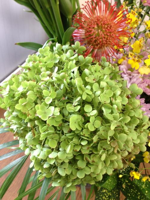 今週のお花とセール情報_a0200423_1146731.jpg