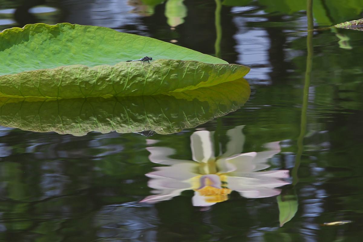 蓮池の徒然に(2)_d0125872_04288.jpg