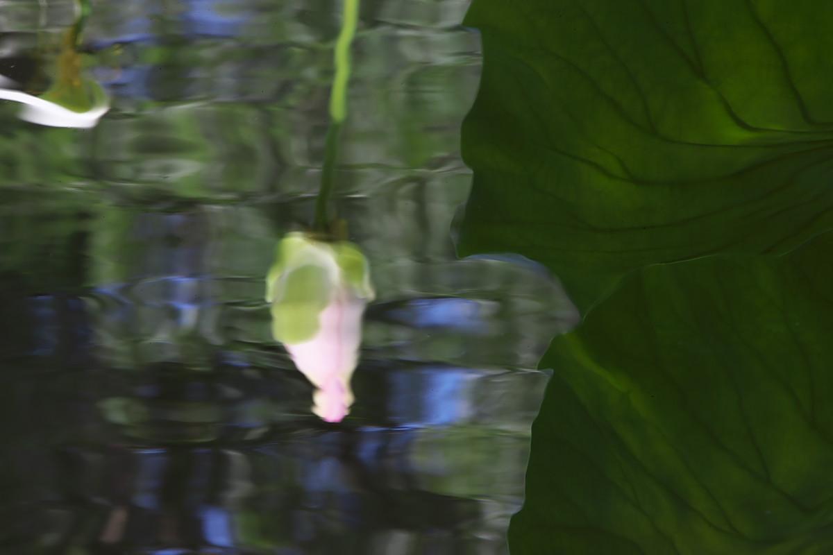 蓮池の徒然に(2)_d0125872_043270.jpg
