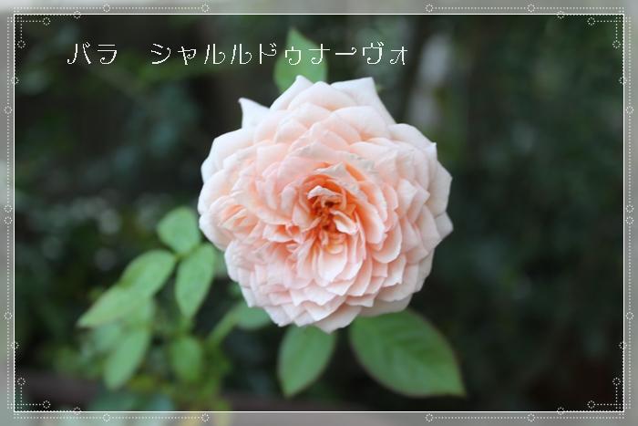 f0165677_1926369.jpg