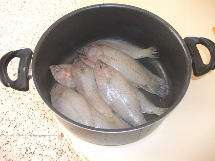 魚・魚・さかな~!_f0253303_2345240.jpg