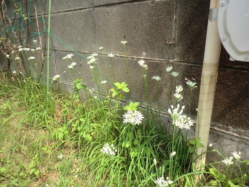 「仁べ」の庭の秋の花 & 体調不良  by  「仁べ」_e0228405_2105278.jpg