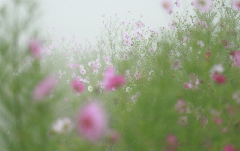 霧の中_f0091207_0304785.jpg