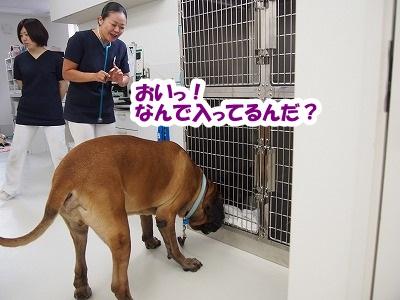 高崎の病院_e0192217_726631.jpg