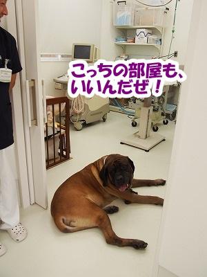 高崎の病院_e0192217_728527.jpg