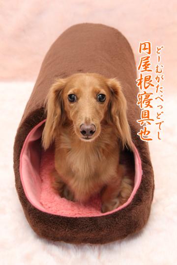 おうちスタジオ Vol. 33:ぬくふかドーム*ロングでし♪_e0166336_15351036.jpg