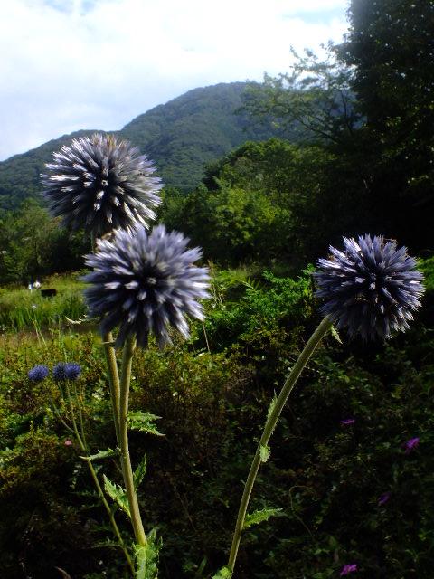 9月9日 箱根湿生花園 その3_e0145782_4505557.jpg