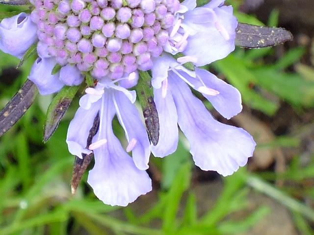 9月9日 箱根湿生花園 その3_e0145782_4534154.jpg