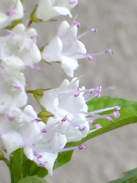 9月9日 箱根湿生花園 その3_e0145782_4591323.jpg