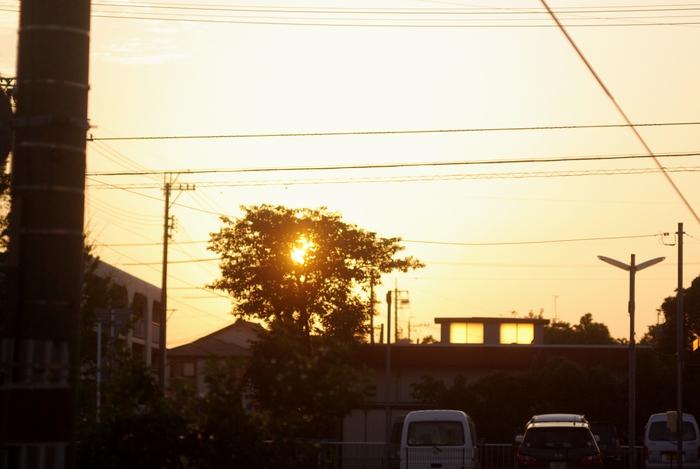 朝の散歩_b0093088_13184898.jpg