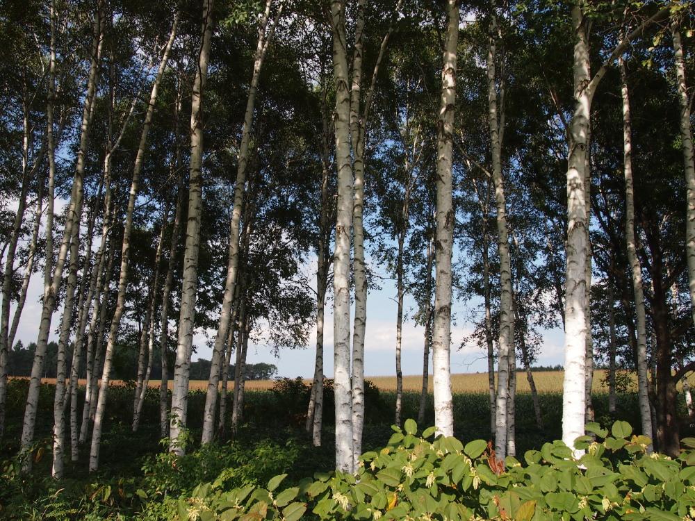 9月の中札内村・・「実りの秋の農村風景」_f0276498_23264412.jpg