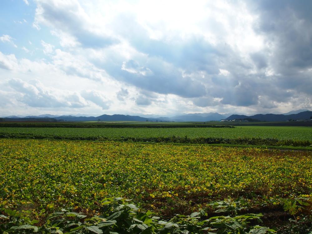 9月の中札内村・・「実りの秋の農村風景」_f0276498_23274570.jpg